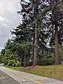 Avenue of Trees, Surrey.jpg