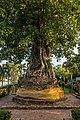 Ayutthaya - Wat Na Phra Men - 0013.jpg