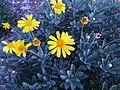 BCBG Flowers 18.jpg