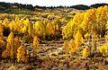 BOULDER MT, UT - 2016-09-30 fall color -15a (31659754985).jpg