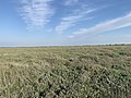 Baie Authie - Fort-Mahon-Plage (FR80) - 2021-05-29 - 44.jpg