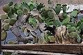 Baifo en Mancha Blanca, Lanzarote 04.jpg