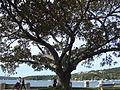 Balmoral Beach (15105023622).jpg