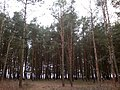 Baltiyskiy rayon, Konigsberg, Kaliningradskaya oblast', Russia - panoramio (37).jpg