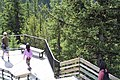 Banff Sulphur Mountain IMG 4191.JPG