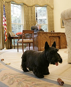 Barney (dog) - Barney at play in the Oval Office.