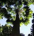 Baum (31156851250).jpg