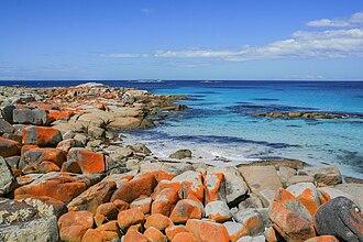 Bay of Fires - Orange-hued granite rocks in Bay of Fires