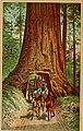 Beauties of California (1883) (14763227784).jpg