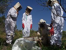 Beekeeping at Souss-Massa National Park.jpg