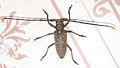 Beetle (2).jpg