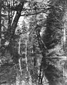 Bend in stream through thick trees with forest reflection shown in water, possibly Indian River in Sitka National Historical (AL+CA 7412).jpg