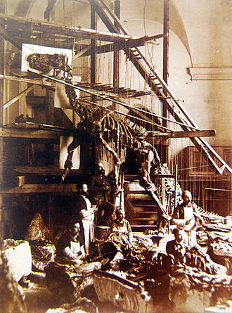 Iguanodon - Photograph of a Bernissart Iguanodon skeleton being mounted in outdated kangaroo-like pose