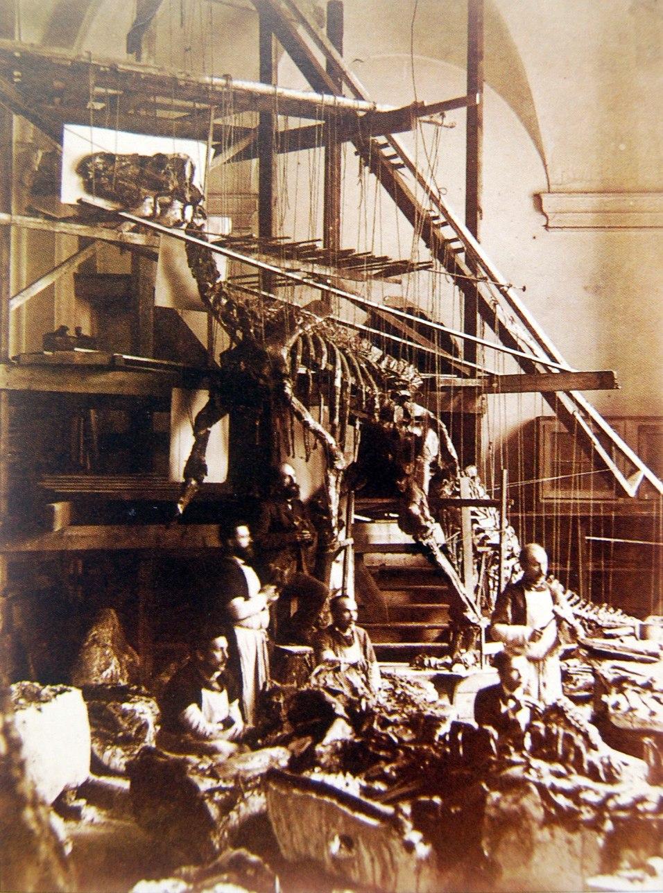 Bernissart Iguanodon mounted skeleton