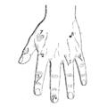 Bertillon - Identification anthropométrique (1893) 355 n&b.png