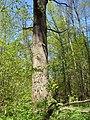 Bezhitskiy rayon, Bryansk, Bryanskaya oblast', Russia - panoramio (162).jpg