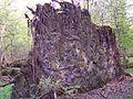 Białowieski Park Narodowy 10.jpg