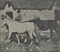 Bidets bretons 1923.jpg