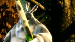 Tiedosto:Big Buck Bunny medium.ogv