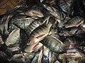 Big Jilebi fishes.JPG