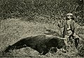 Big game shooting in Alaska (1904) (14750599595).jpg