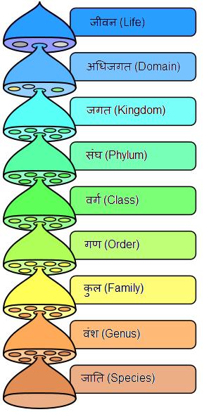 Biological classification devnagri