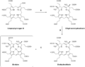 Biosynthesis Siroheme.png