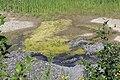 Biotop - panoramio (3).jpg