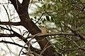 Bird Botswana 02.jpg