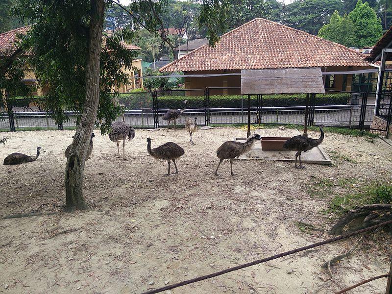 Bird Park in Kuala Lumpur (Malaysia) (14).jpg