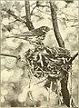 Bird lore (1906) (14564830577).jpg