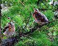 Birds Prešov16Slovakia15.JPG