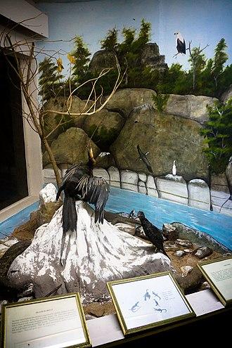 Lake Malawi Museum - Image: Birds of Lake Malawi exhibit Lake Malawi Museum