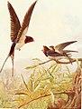 Birds through the year (1922) (14568748670).jpg
