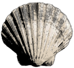 Bivalve Sea Shell.png
