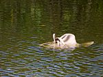 Black Point Wildlife Drive, Merritt Island FL - Flickr - Rusty Clark (221).jpg