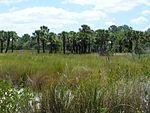 Black Point Wildlife Drive, Merritt Island FL - Flickr - Rusty Clark (247).jpg