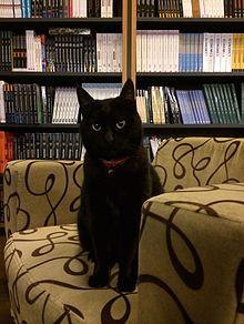 The cat black essay