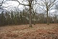 Blean Wood Nature Reserve - geograph.org.uk - 1209653.jpg