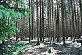 Blick in einen Wald im Teutoburger Wald.jpg