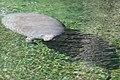 Blue Spring State Park (8501214864).jpg