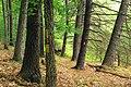 Bob Webber Trail (6) (14596578101).jpg