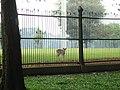 Bogor Botanical Gardens Java39.jpg
