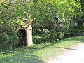 Bois de Vincennes (2014) 31.jpg