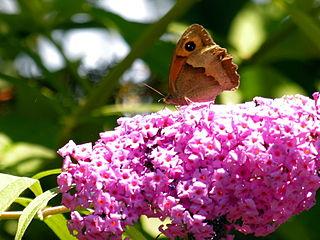 Bolboreta 090710 23.jpg
