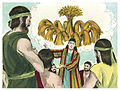 Book of Genesis Chapter 37-3 (Bible Illustrations by Sweet Media).jpg