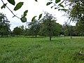 Bornem Brandheide 38 Hoogstamboomgaard (4) - 230216 - onroerenderfgoed.jpg