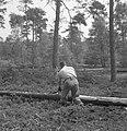 Bosbewerking, arbeiders, boomstammen, werkzaamheden, Bestanddeelnr 251-7857.jpg