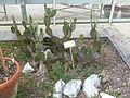BotanicGardensPisa (123).JPG
