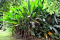Botanic garden limbe116.jpg